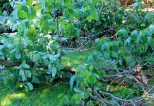 Tree Debris e1586632991772