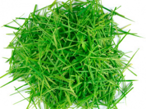 grass clippings 3